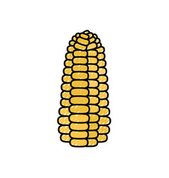 Corn fresh vegetable vector