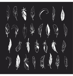 Set of different hand drawn feathers on vector