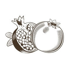 Pomegranates in vintage style Line art vector image vector image