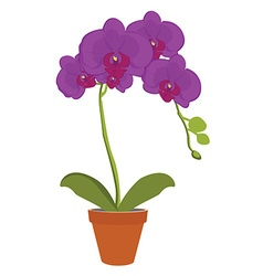 Exotic orchid flower vector image