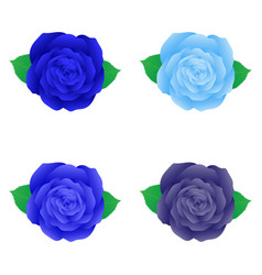 Isolated blue rose for decoration vector