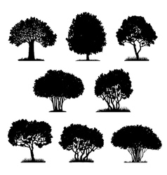 set of tree silhouettes vector image vector image