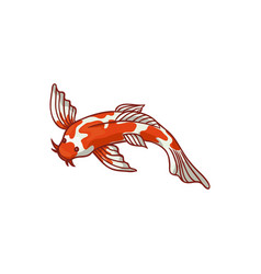 Top view japanese asian koi carp goldfish vector