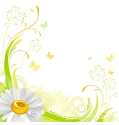Floral summer background with white daisy flower vector