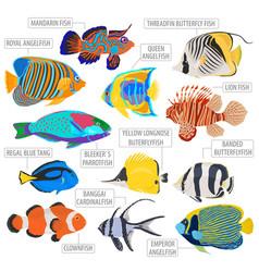 Freshwater aquarium fish breeds icon set flat vector
