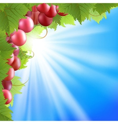 blue sky and vine vector image