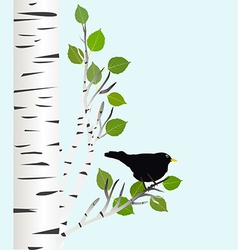 Blackbird on a birch branch vector