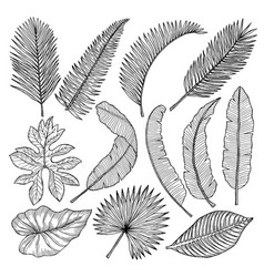 floral hand drawn pictures of tropical leaves vector image vector image