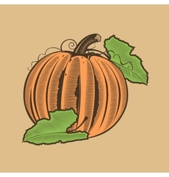Pumpkin in vintage style colored vector