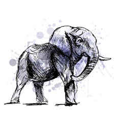 colored hand sketch of an elephant vector image