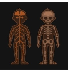 Human body anatomy set skeletonand nervous vector