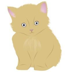 cat kitten vector image vector image