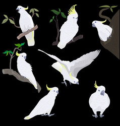 Yellow crested cockatoo vector