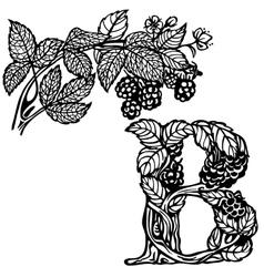 Blackberries on a branch B vector image