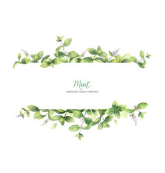 watercolor banner of mint branches isolated vector image vector image