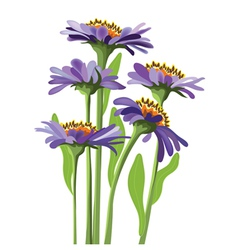 floral design purple aster vector image