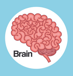 brain think idea creative innovation vector image