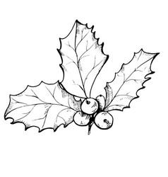 Holly berry sketch vector