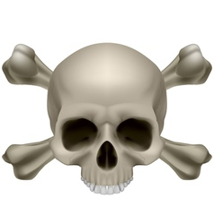 Human skull and crossbones vector image