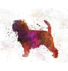 Affenpinscher 01 in watercolor vector