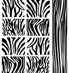 Zebra patterns vector