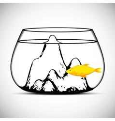 Gold fish isolated on a white vector image