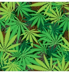 cannabis hemp texture vector image