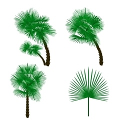 Set green palm tree isolated on white background vector