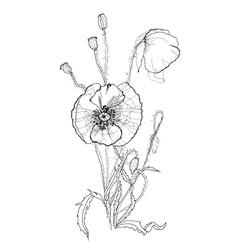 Poppies pen drawing vector image vector image