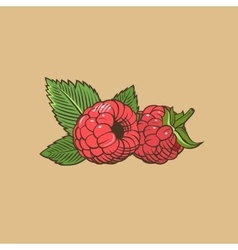 Raspberry in vintage style Colored vector image