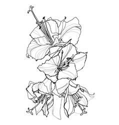 Hibiscus pen drawing vector