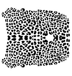 background of leopard skin pattern vector image vector image