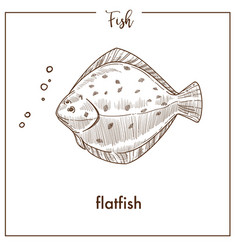 Flatfish sketch fish icon of flounder or vector