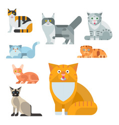 Cats cute animal funny vector