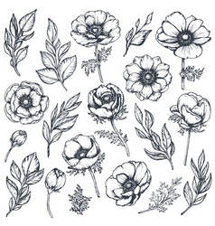 Collection of hand drawn anemone flowers vector