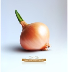 Onion bulb isolated on gray background vector