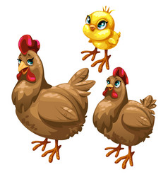 Stages of growing brown chicken birds vector