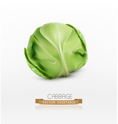 Cabbage isolated on a white background vector