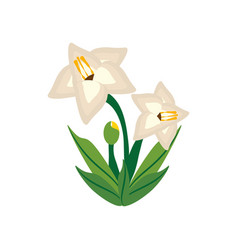 Gladiolus flower image icon vector