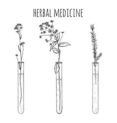 Hand drawn lavender plants flowers in vitro vial vector