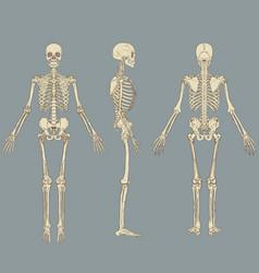 human skeleton chart vector image vector image