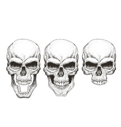 One skull in different guises vector image