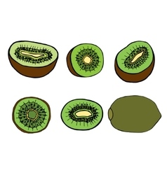 Fruit kiwi vector