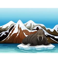 A walrus vector image vector image