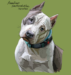 American staffordshire terrier colorful hand vector