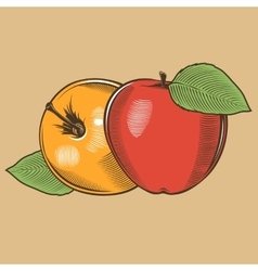 Apples in vintage style colored vector