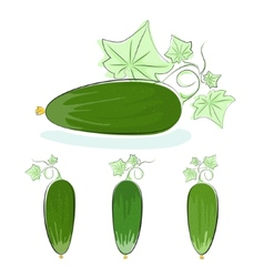 Cucumber vegetable with leaves on a white vector image vector image
