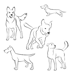 Set of dogs on white background vector image