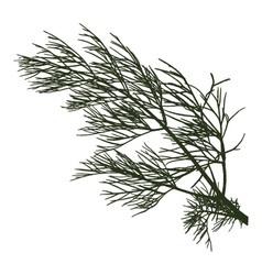 Twig of dill vector