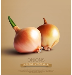 Two onions vector